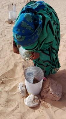 saharawi irrigazione