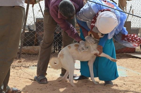 saharawi vaccinazione